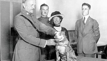 Sergeant Stubby: Original dog of war