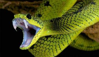 Essential Guidelines For Surviving Snake Bites