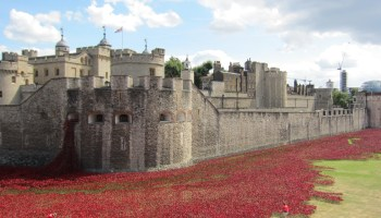 Remembrance Day: History of the poppy