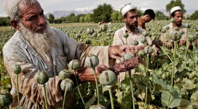 Why the US Lost the Drug War Vs the Taliban