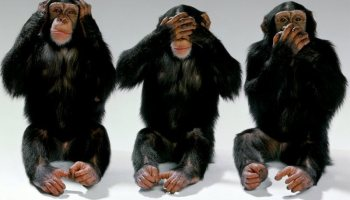 The problem with military leadership, as told by 3 monkeys and a step ladder