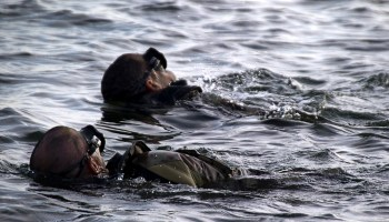 Swim or Die: The formidable 7000m Special Forces swim