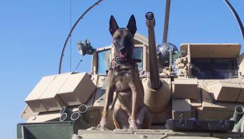 """""""Hero Dogs"""" on Fox Nation Highlights our Quiet Professional Teammates"""