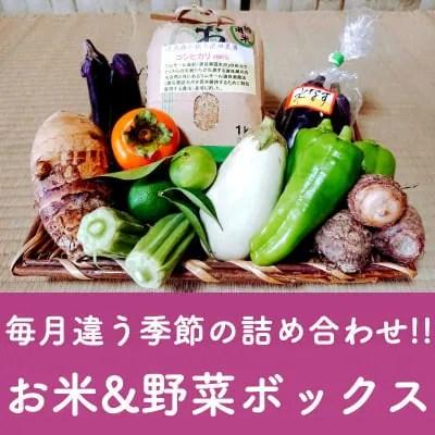 【1日限定3セット】毎日違う季節の詰め合わせ!!お米1kg&野菜ボックス *関東、中部、東北3県 配送代込み2900円*