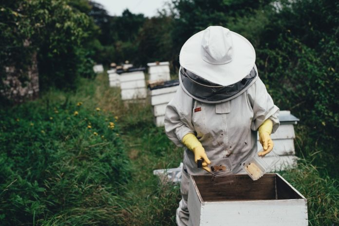 cliomakeup-miele-per-pelle-capelli-3-apicoltore