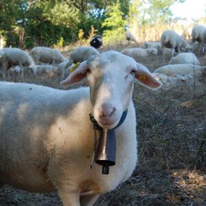 Mouton de la ferme Bergère des plantes, fabrication française