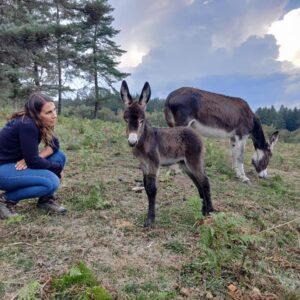 Les ânes d'Autan, savoir-faire local déniché par Cmylocal