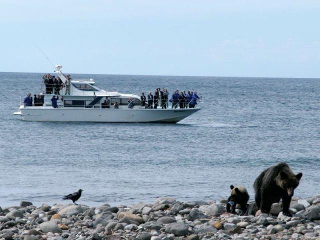 想要观赏到知床的精髓一定要去大海中观赏! 乘坐观光船从海面观赏棕熊。