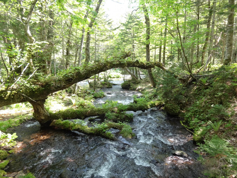 景观连向未来,阿寒的自然信仰