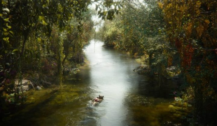 The Jungle Book is up for best visual effects oscar