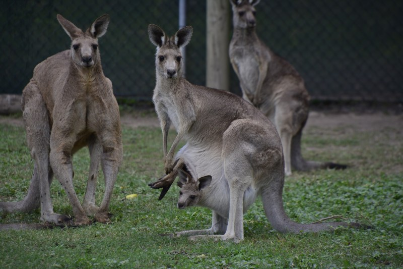 Amazing Vacations At Budget Brisbane City Accommodation