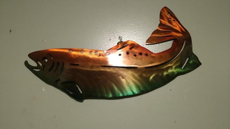 multi colored fish