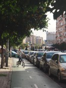 See the orange trees line the street!