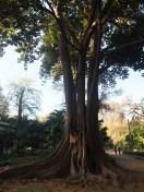 Beautiful, old tree
