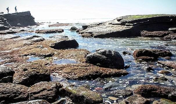 cabrillo_tide_pools_1_t1316