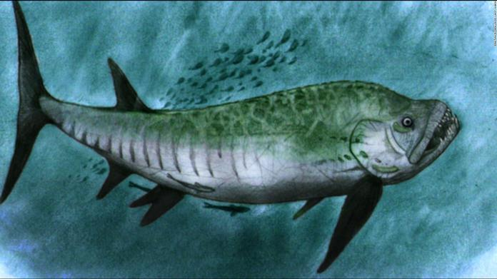 Student leads investigation of fossil of fearsome giant fish