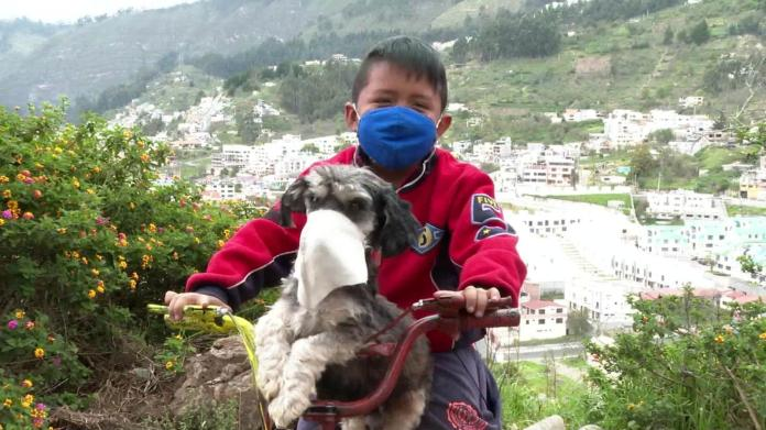 We talk to the boy who puts a mask on his dog