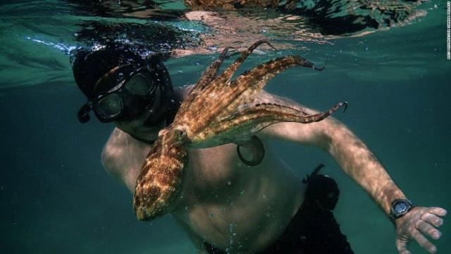 """My Octopus Teacher"""": la historia del vínculo entre un hombre y un pulpo"""
