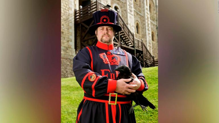 Merlina, the crow of the Tower of London, does not appear