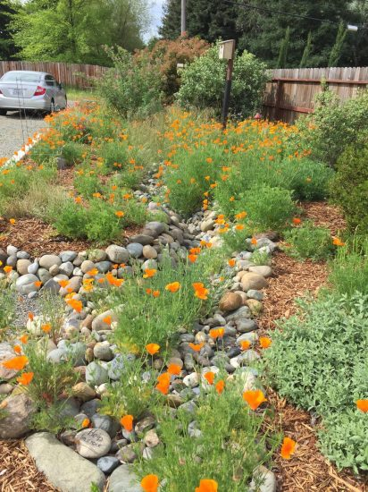 The Watershed Approach to Landscaping - Part I - California Native ...