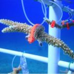 Disney Conservation Fund to support CCMI's coral gardening