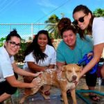 PAWS lends helping hand to Cayman's canines