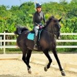 Cayman riders excel in 'online' equestrian tourney