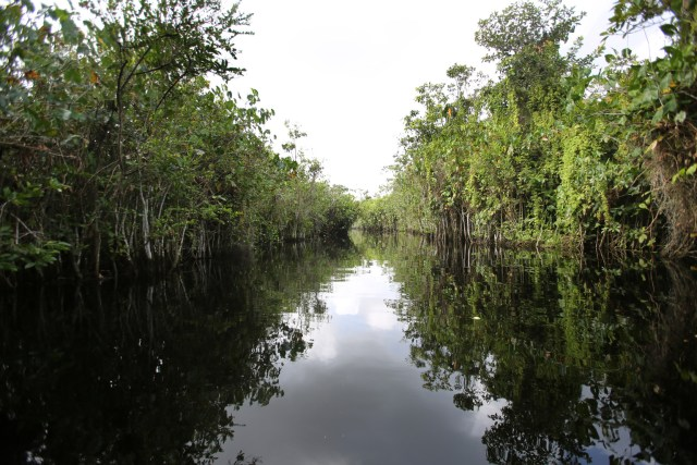 Trees line the banks of a creek along the Pomeroon River in the interior of Guyana. The Catholic Church supports the efforts of scientists to study the causes and effects of climate change and insists governments and businesses must get serious about specific commitments for protecting the environment. (CNS/Bob Roller)