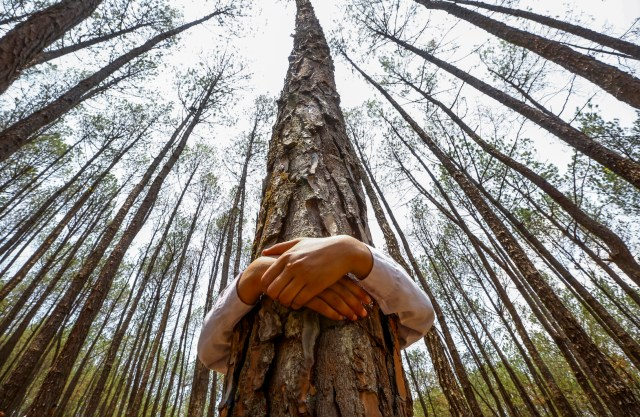 "A Nepalese man hugs a tree while celebrating World Environment Day at the forest of Gokarna, on the outskirts of Kathmandu, Nepal, in this 2014 photo. The Vatican has announced that Pope Francis' encyclical on the environment, ""Laudato Si': On the Care of Our Common Home,"" will be released June 18. (CNS/EPA)"