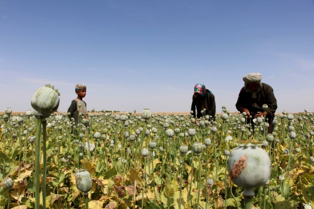 Afghan farmers extract opium to be processed into heroin in April. (CNS/EPA)