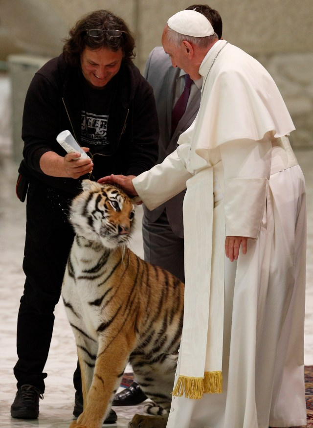 Pope Francis pets a tiger during an audience with circus members in Paul VI hall at the Vatican June 16. (CNS/Paul Haring)