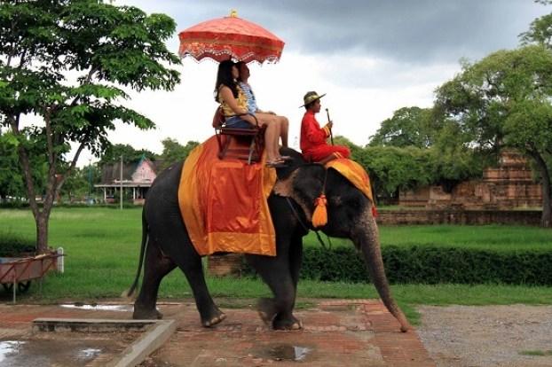 Jaipur Elephantastic Elephant Farm