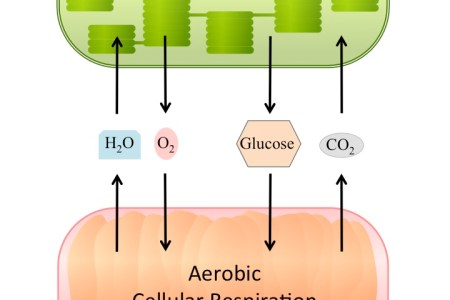 Interior cellular respiration vs photosynthesis 4k pictures 4k photosynthesis vs cellular respiration venn diagram goal photosynthesis vs cellular respiration venn diagram essay on photosynthesis photosynthesis homework ccuart Image collections