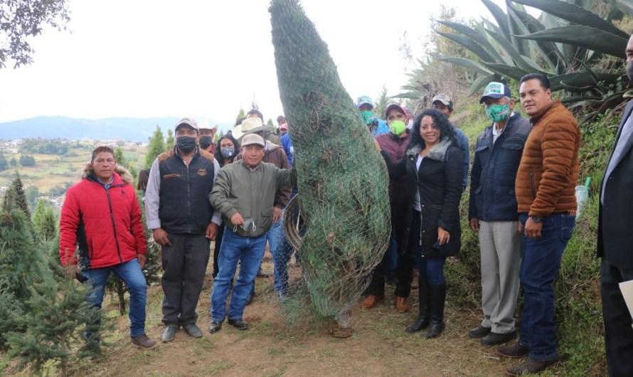 Inicia venta de árboles navideños en Xonacatlán