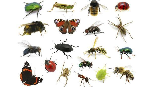 Entomología Forense, ciencia que resuelve crímenes