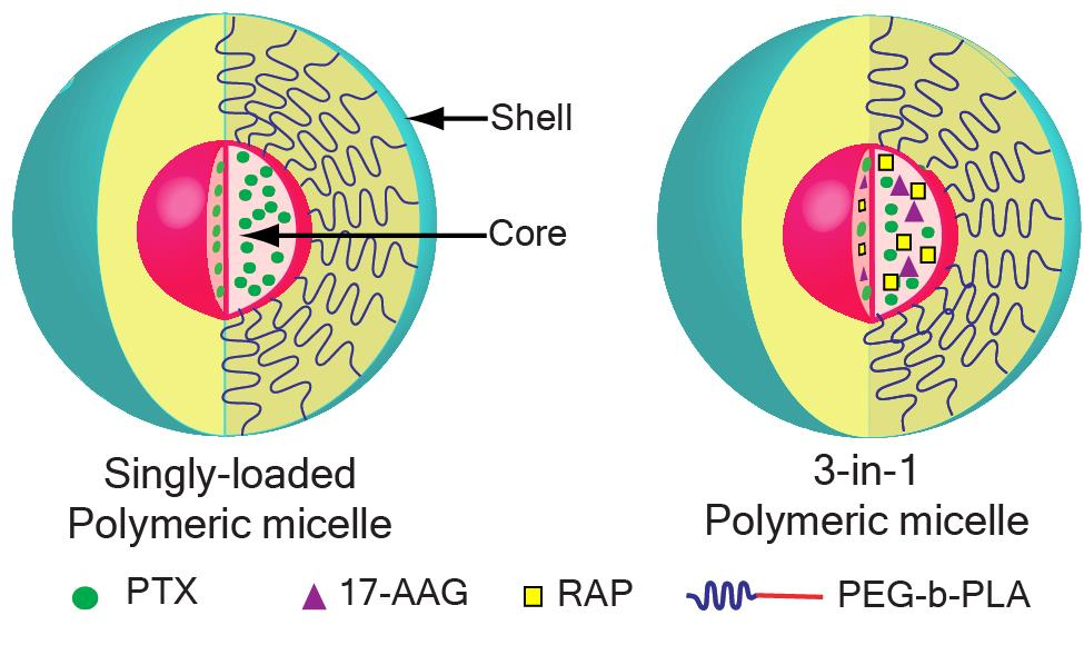 Polymeric Micelle/Combination Delivery | Co-D Therapeutics