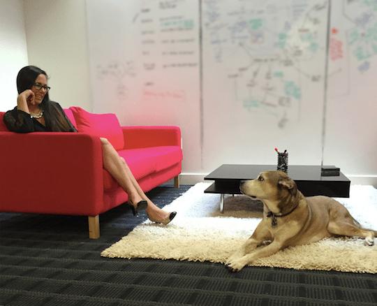 cibo branding agency dog