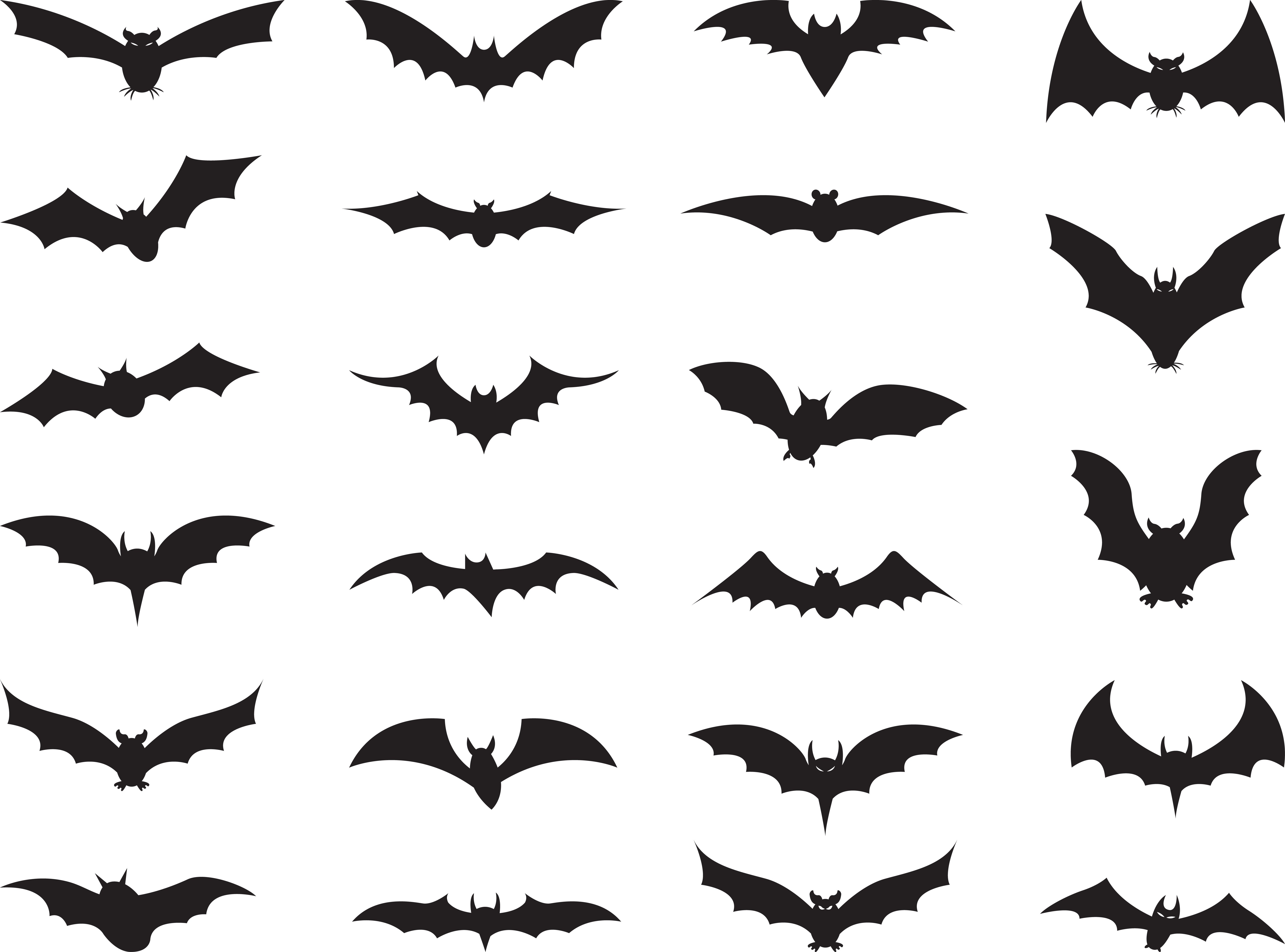 Bats Wiki Everything You Wanted To Know About Bats Ever