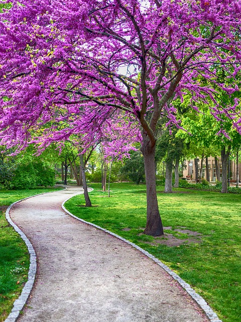 Weg Baum Blüten