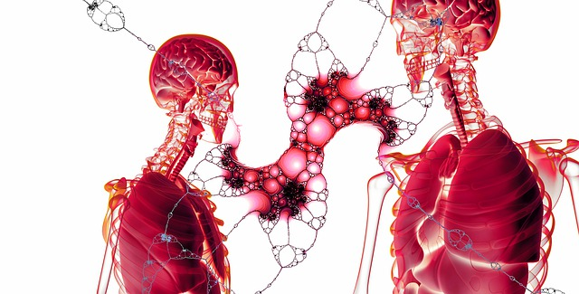 Anatomie Mensch Körper