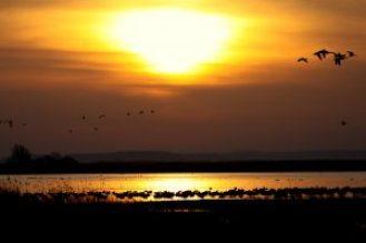 soleil-orange-canards-volant