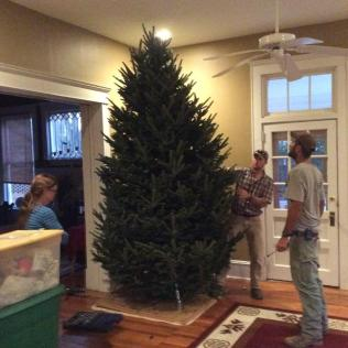 2015-tree-before