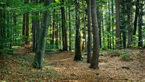 forest-972793_1920