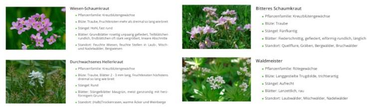 gartenrevue-pflanzenbestimmung