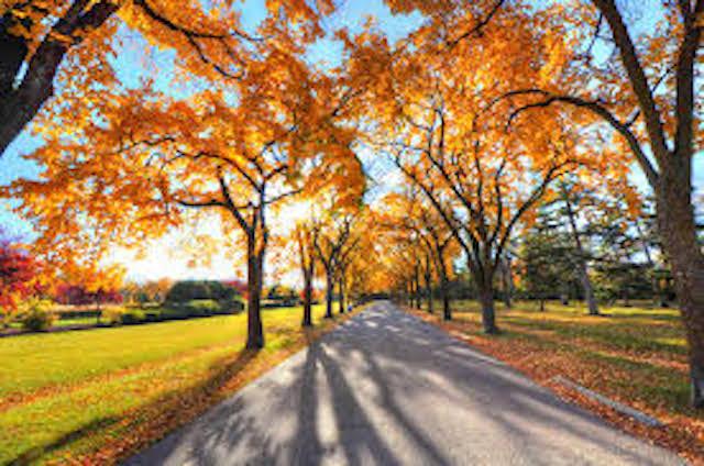 Pretty Fall Road