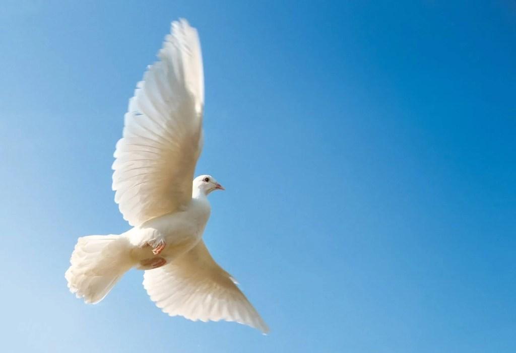 paloma, paz, deporte, conflicto