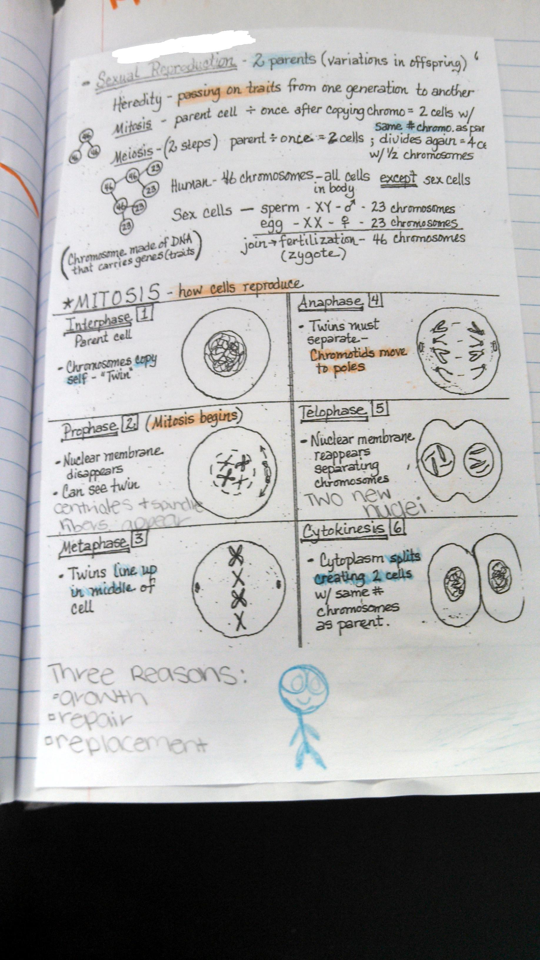 Overview Cell Reproduction Worksheet Answers