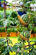 26 Creative Vegetable Garden Ideas And Decorations (17)