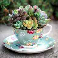 40 Easy DIY Teacup Mini Garden Ideas to Add Bliss to Your Home (10)
