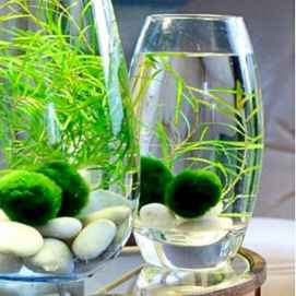 40 Easy To Try Hydroponic Gardening For Beginners Design Ideas And Remodel (17)